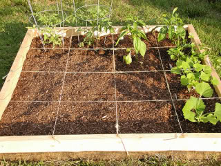 Square Foot Gardening in 10 Easy Steps