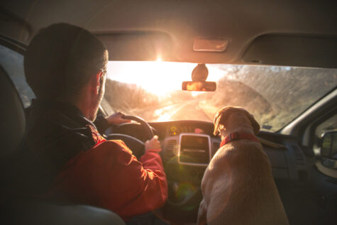 driving with dog on a road trip
