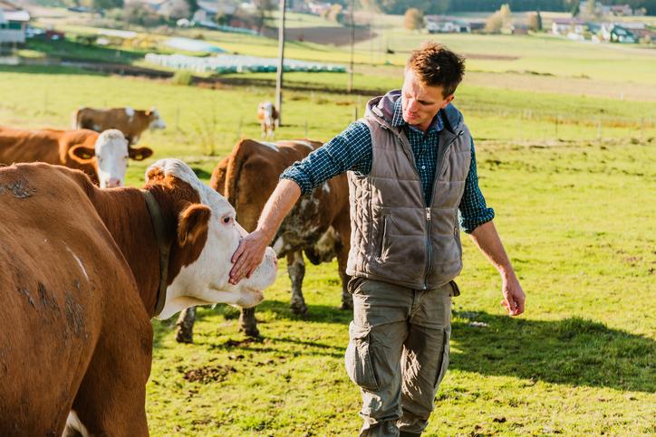 grass fed free range beef farm with farmer