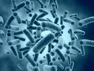 Probiotics Useless Final